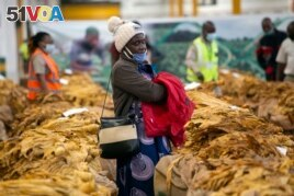 A tobacco grower waits patiently for her tobacco crop to be sold at the auction floor in Harare, Thursday, April 8, 2021.