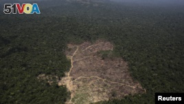 Deforestation Is a Threat to the Amazon