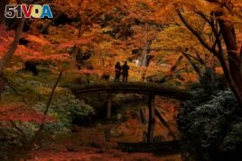 Two visitors take pictures of autumn leaves at Rikugien Garden in Tokyo, Japan, Dec. 10, 2019. (AP Photo/Jae C. Hong)