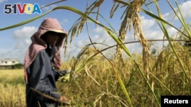 Cambodian, Thai Rice Voted Best in the World