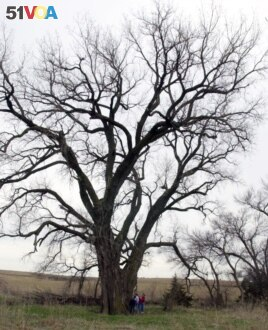 Members of the Hackbart family stand next to a giant cottonwood tree on the family property near Milford, Neb., April 13, 2002. The national co-champion Eastern cottonwood tree is between 100-and 150-years old. (AP Photo)
