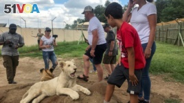 Tourists interact with a lion cub at the Lion and Safari Park near Johannesburg, South Africa, February 7, 2020. (Reuters/Tim Cocks)