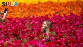 Norah Miller has her picture taken by her friend Emma McCain as they visit the 50 acres of Ranunculus flowers at