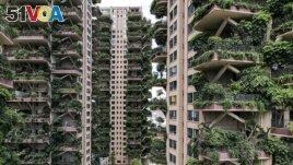 This August 3, 2020, photo shows an experiment in green housing in Chengdu, located in China's southwestern Sichuan province. The apartment balconies are covered with plants. (Photo by AFP)