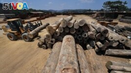 FILE - An employee uses heavy machinery to stack logs at the Serra Mansa logging and sawmill company, in Moraes Almeida district, Itaituba, Para state, Brazil, in the Amazon rainforest, Sept. 12, 2019.