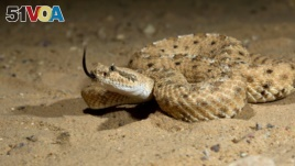 Robot Takes Cues from Deadly Rattlesnakes