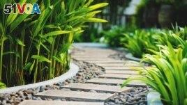 Path in tropical garden