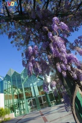 Flowers bloom on campus at Santa Clara University in Santa Clara, California.