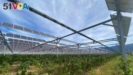 Solar panels at Pierre Escudie's vineyard on Septemember 30, 2021. (REUTERS/Alexandre Minguez)