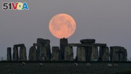 FILE - Sheep graze as the full moon, known as the