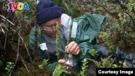 Botanist Works to Save Hawaii's Rare Plants