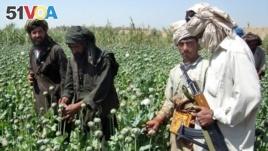 Afghanistan Drug
