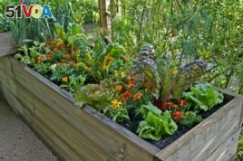 A raised bed of vegetables and flowers in a urban garden