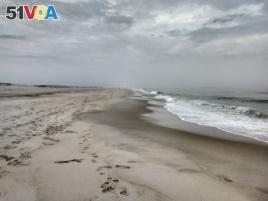 Assateague island is made mostly of sand, and stretches for 43.5 kilometers.