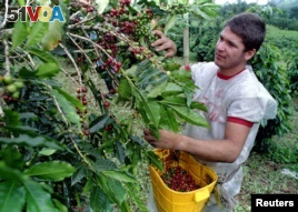Scientists Discover Secrets of Coffee
