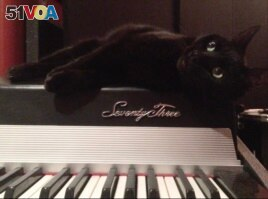 Narina, Bryant's pet cat sits on top a keyboard as if waiting for her song to begin. (Photo Courtesy of Alice Bryant)