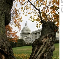 The US Capitol and the fall leaves of a Yoshino cherry tree